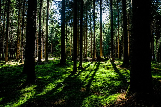 forest-505856_640